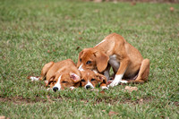 Three cute puppies relaxing in lush green grass.